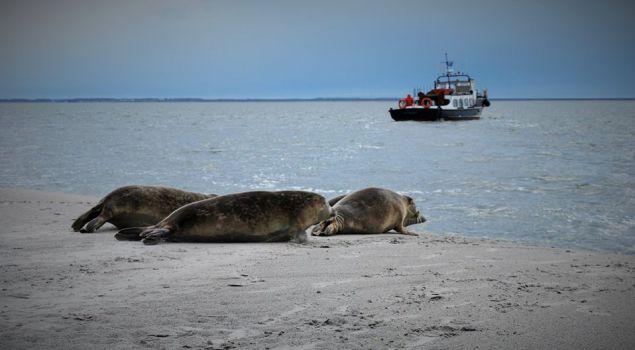 Beleef het Wad: op zoek naar zeehonden