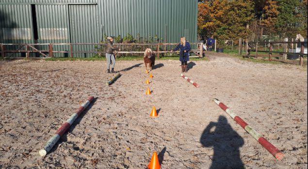 Coaching met mini paarden - Het uitje met PK!